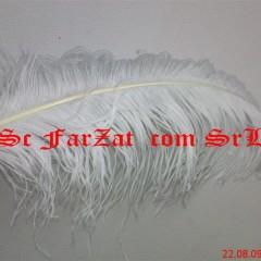 pene strut 50 cm (medium)
