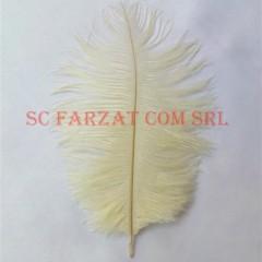 pene ivoire de strut la 15-25 cm (1)