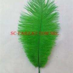 pene verzi de strut la 15-25 cm (1) (small)