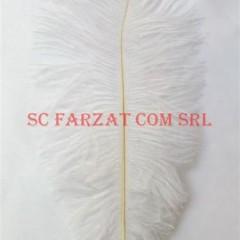 pene albe de strut de 15-25 cm (1)