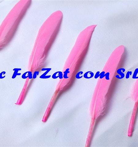 pene decorative de porumbel roz (1)