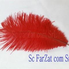 pene rosie de strut de 15-25 cm (2) (small)