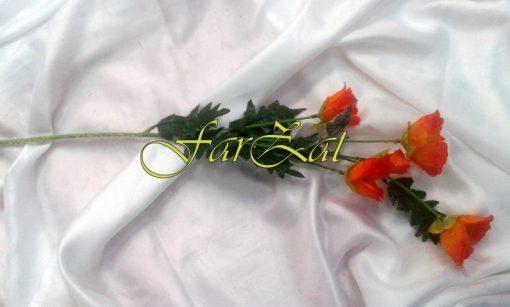 maci (3)