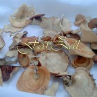 ciuperci (1)