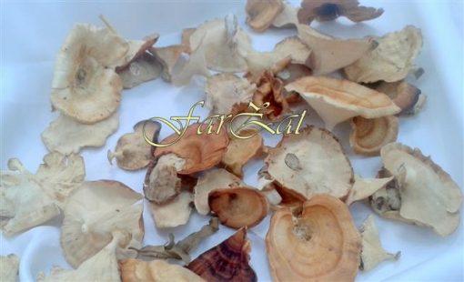 ciuperci (2)